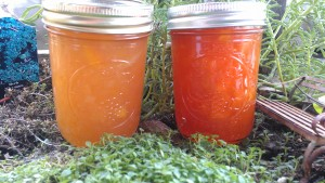 White Peach Honey and Red Haven Peach Honey