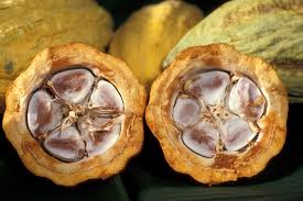 Cocao (Image from Wikimedia.)