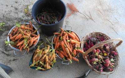 Garden bounty.