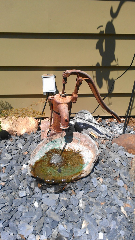 Mom's water garden with an antique pump.