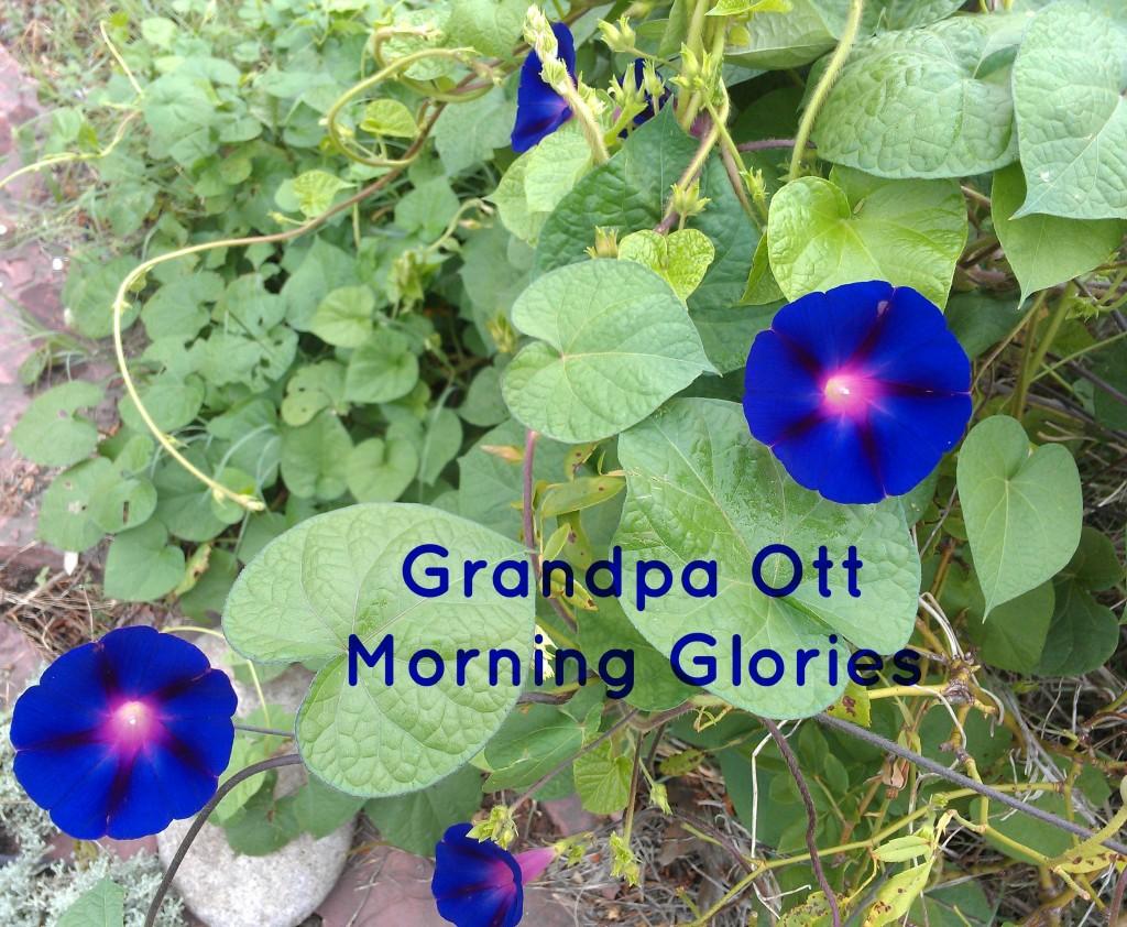 grandpa ott