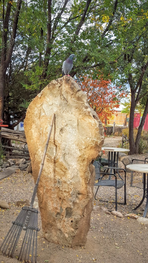 Pigeon in the Zen garden at Wired? (Taos)